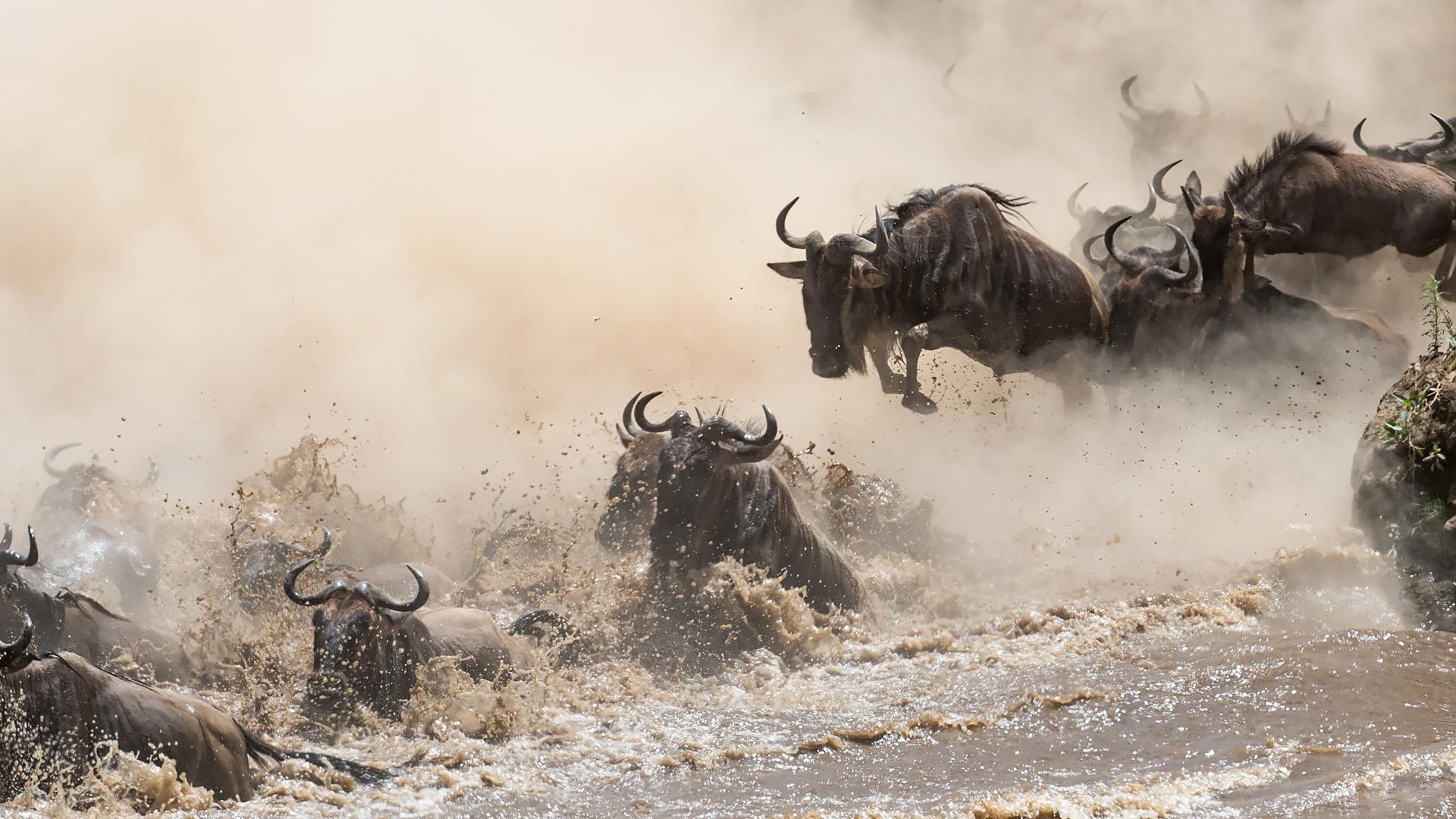 Masai Mara - July 2017 -
