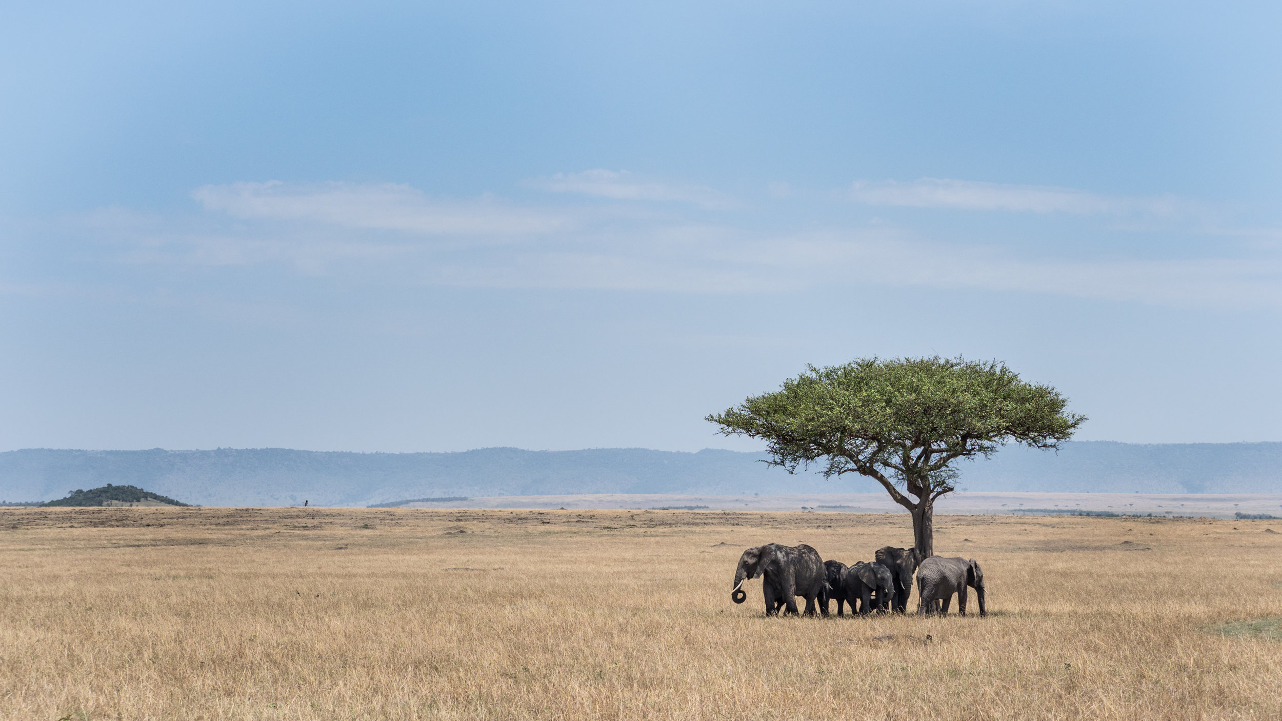Masai Mara - September 2017 -
