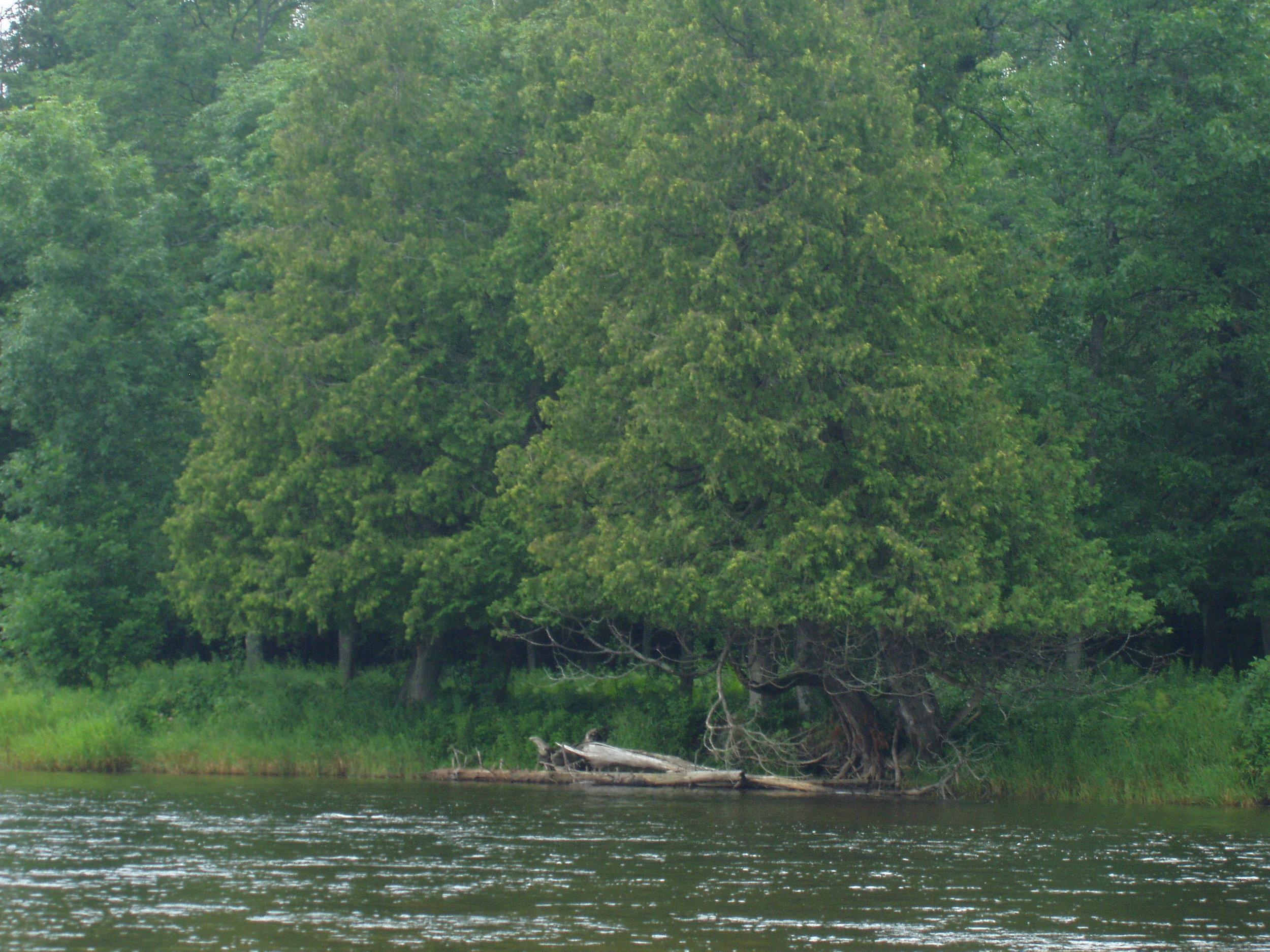 Au SAble River north of Glennie