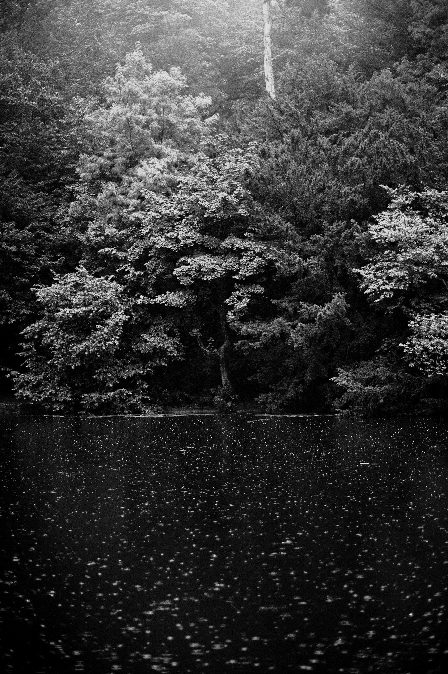 1 Rain & Tree copy.jpg