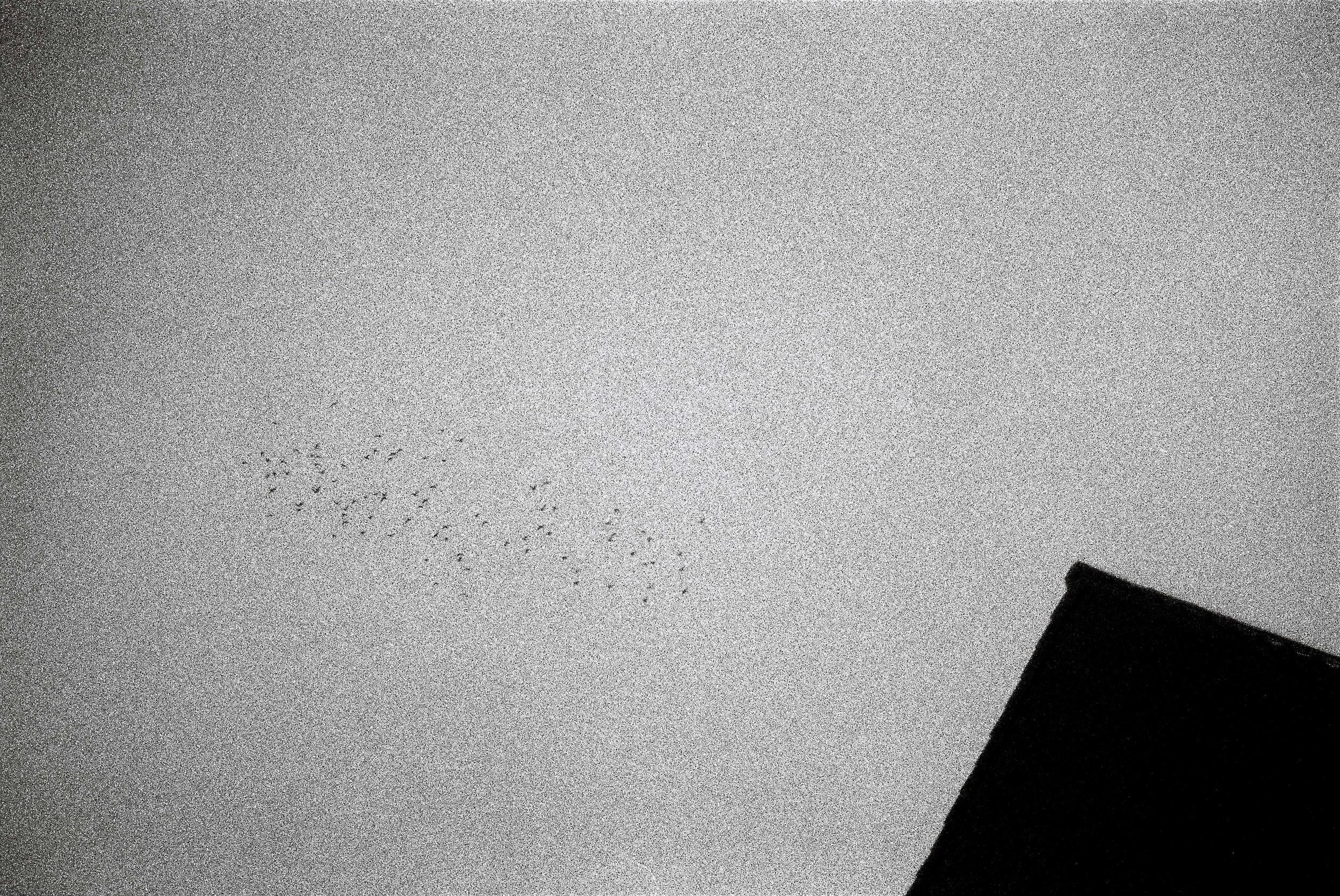 birds and grain love.jpg