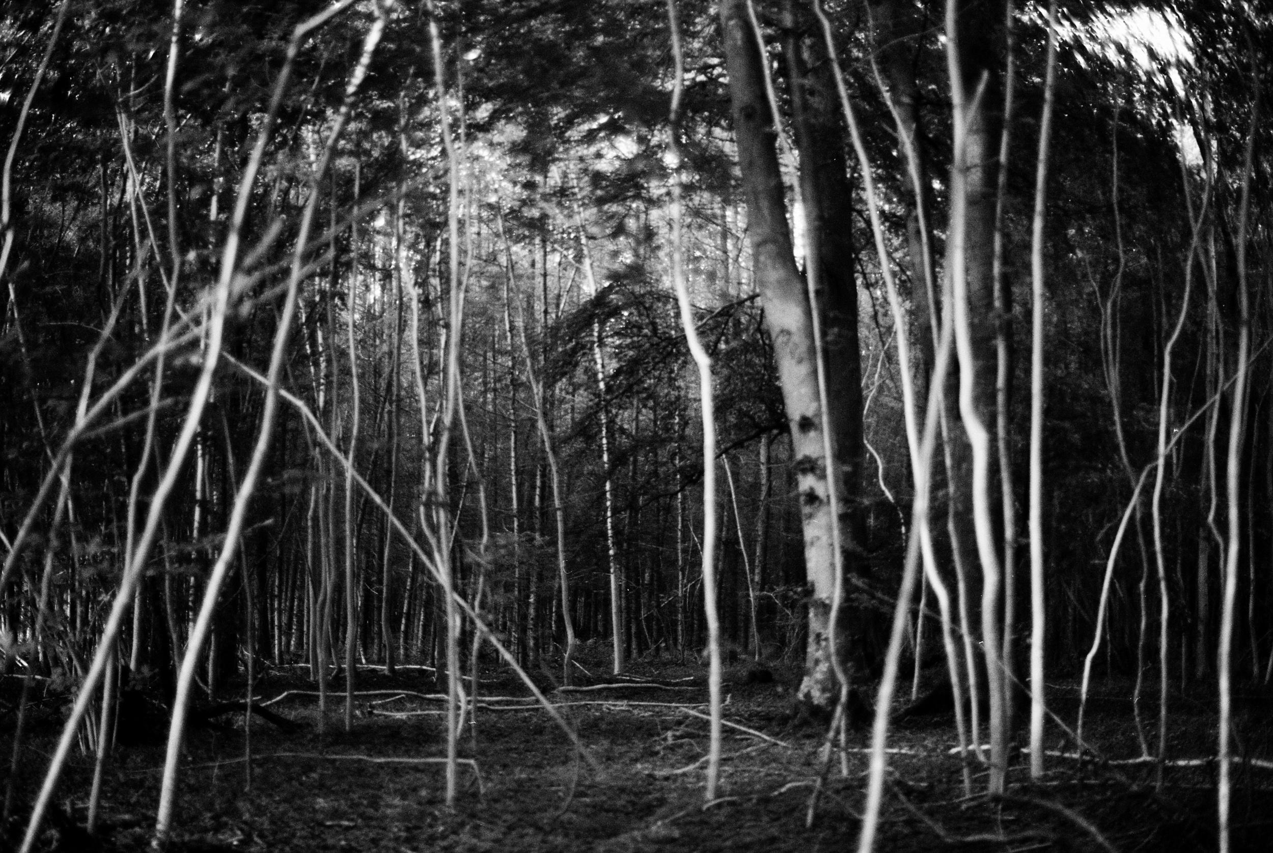 4 White Woods copy.jpg