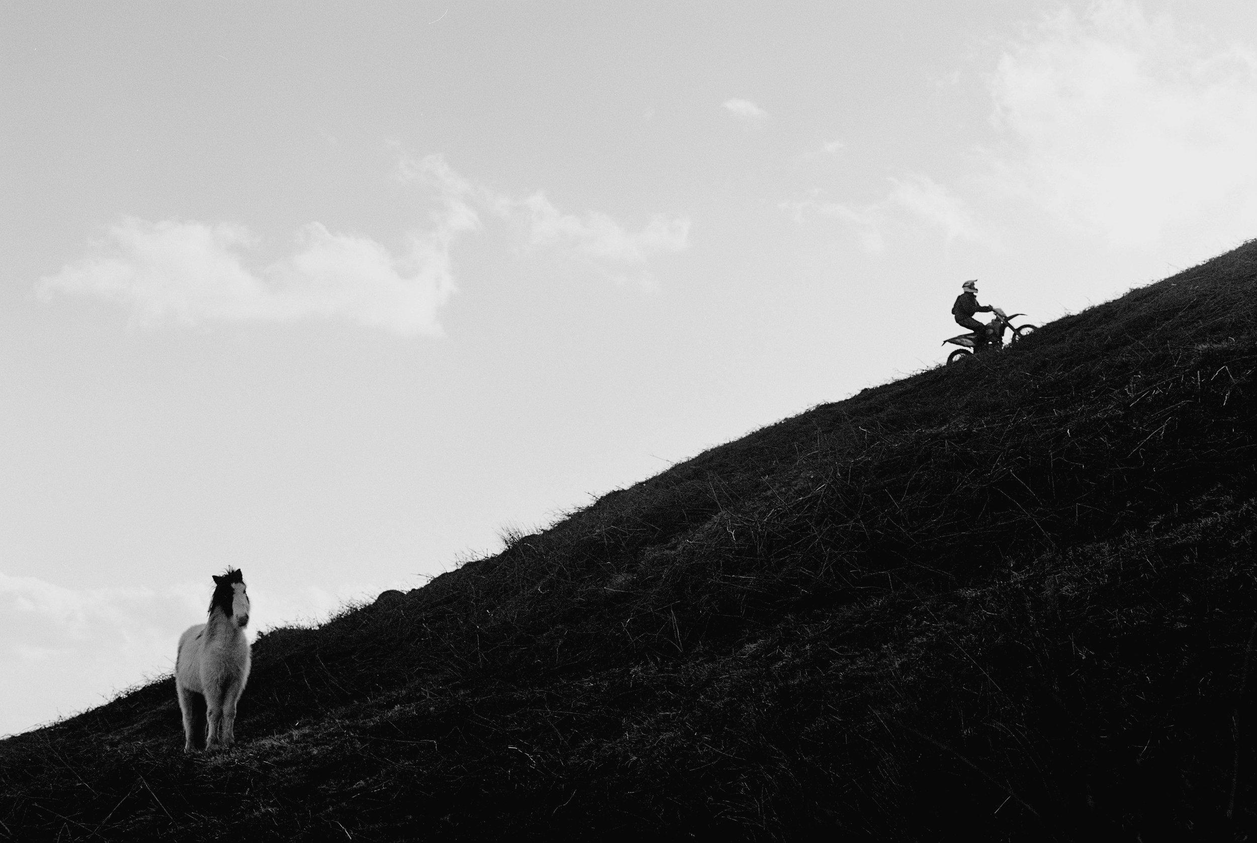 duo bike and horse.jpeg