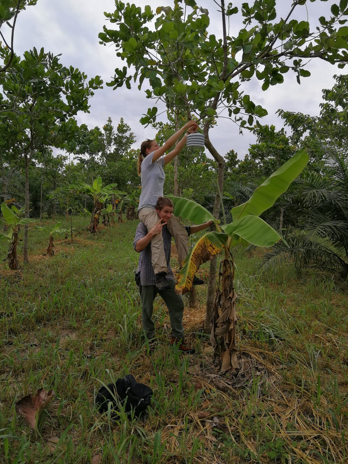 Installation of micro-climate loggers on a cashew tree – dream-team at work!