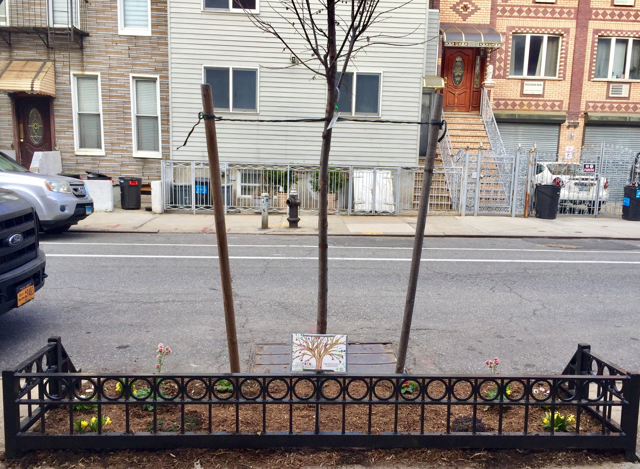 Greenpoint's 500th New Tree!