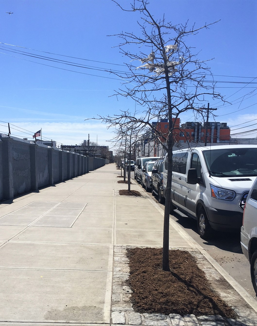 Freshly mulched tree beds lining Kingsland between Norman and Greenpoint Avenues