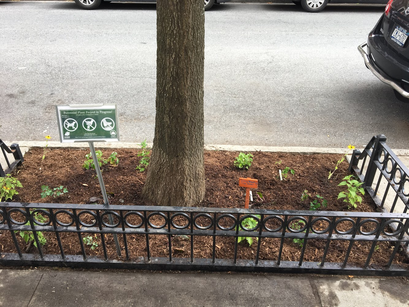 Just Planted