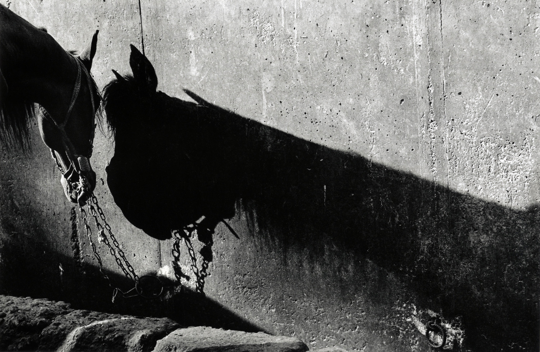 walter_rothwell_photography_pyramids_giza-07.jpg