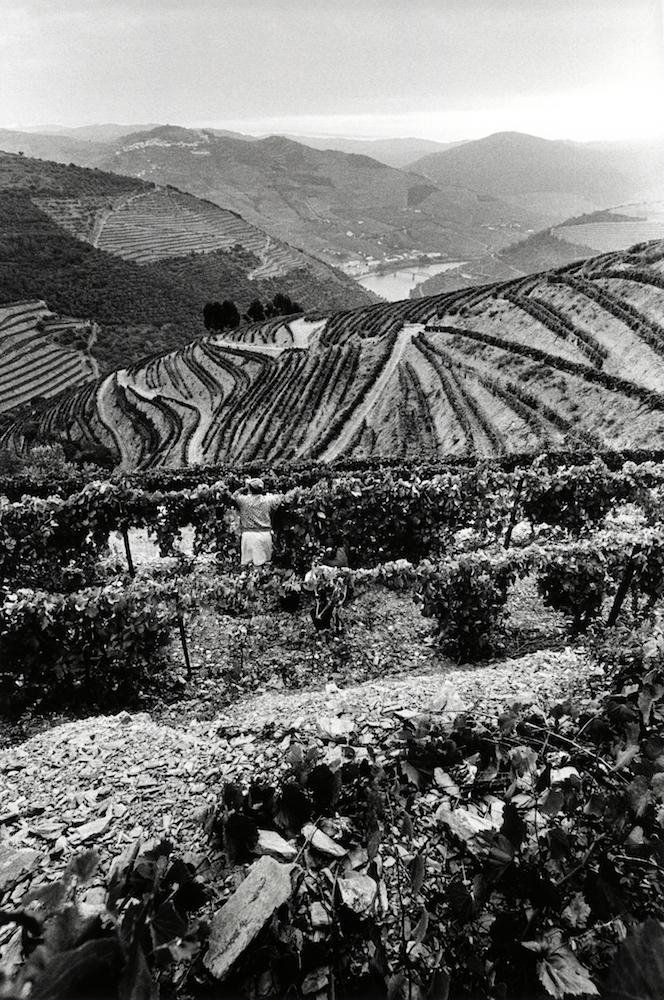 walter_rothwell_douro_port_wine_05.jpg