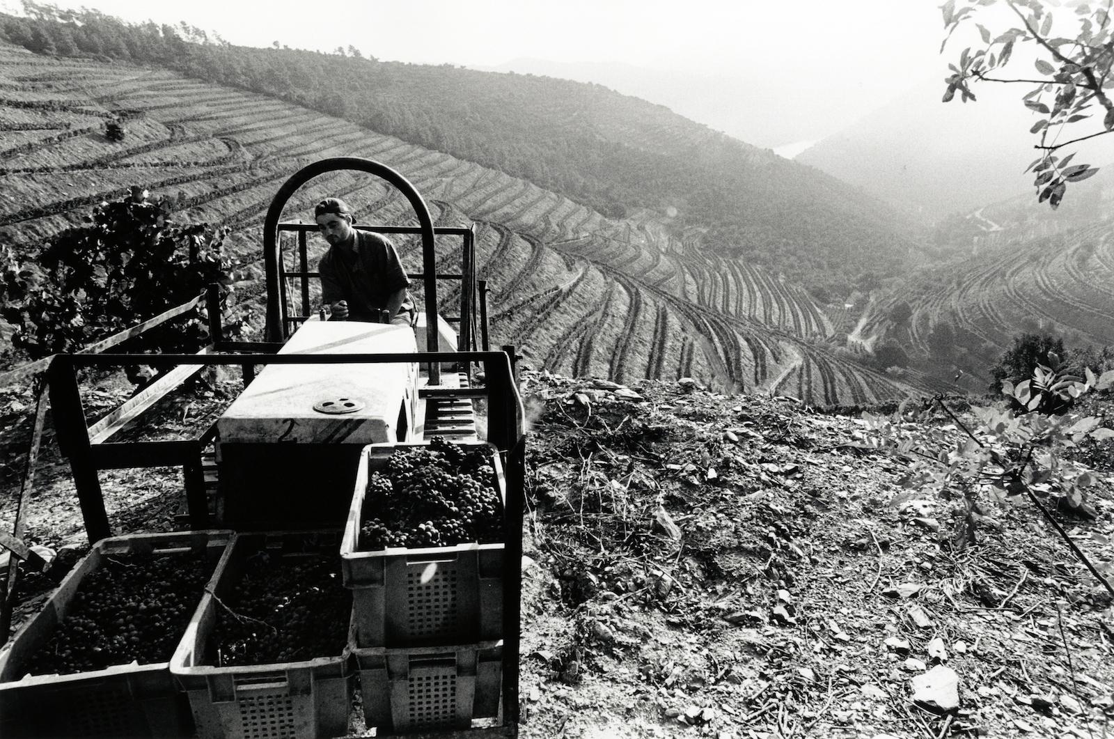 walter_rothwell_douro_port_wine_11.jpg
