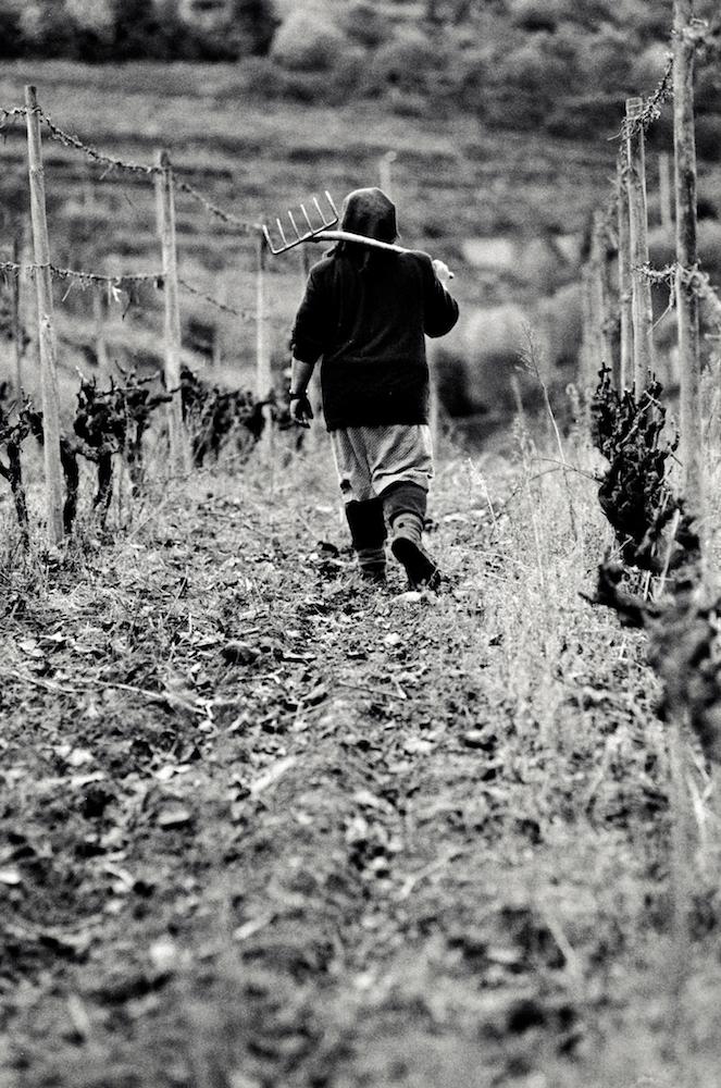 walter_rothwell_douro_port_wine_27.jpg