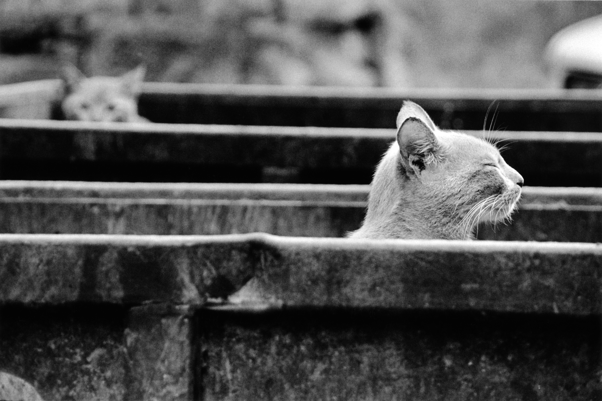 walter_rothwell_photography_cats-02.jpg