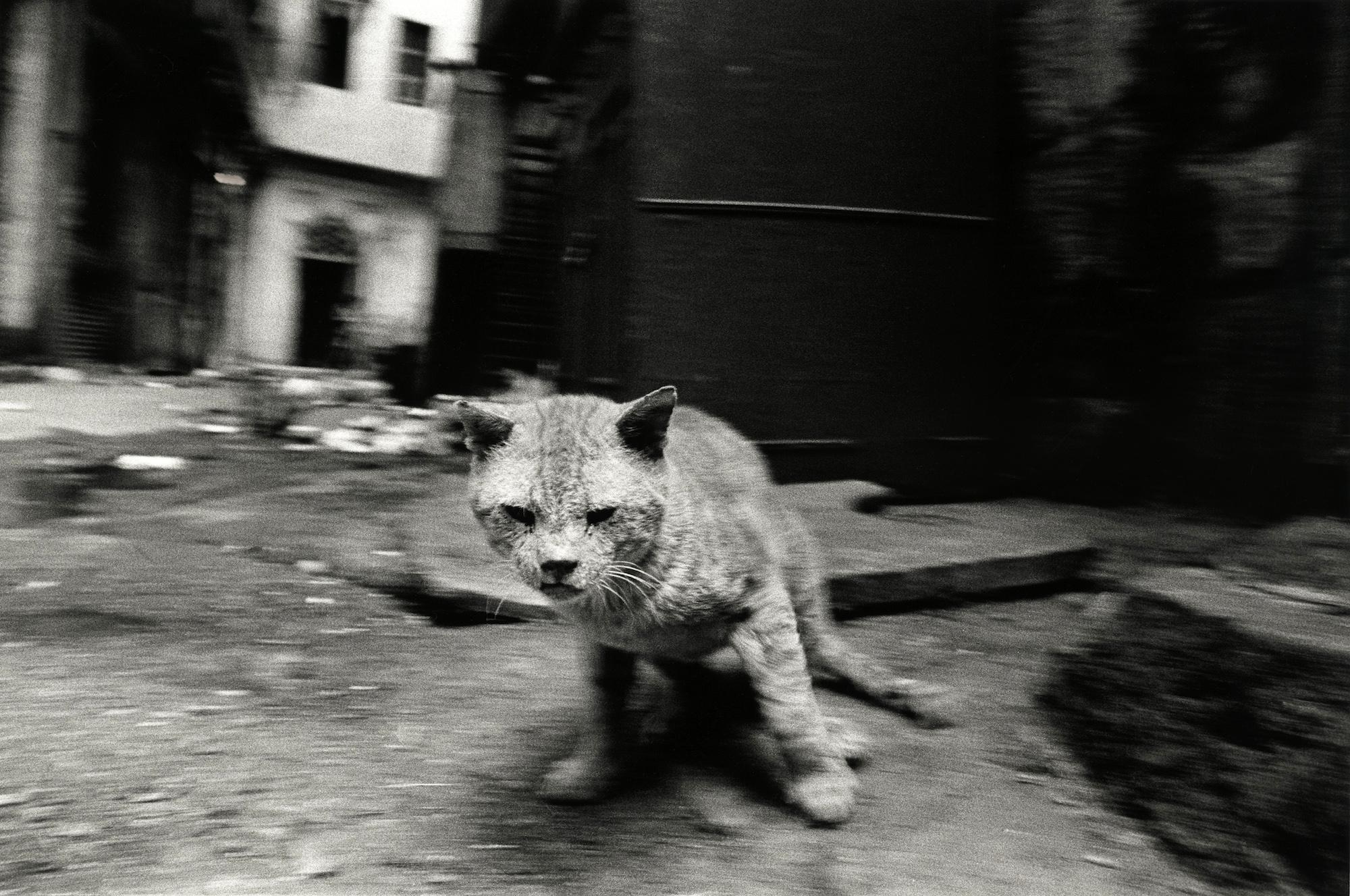 walter_rothwell_photography_cats-04.jpg