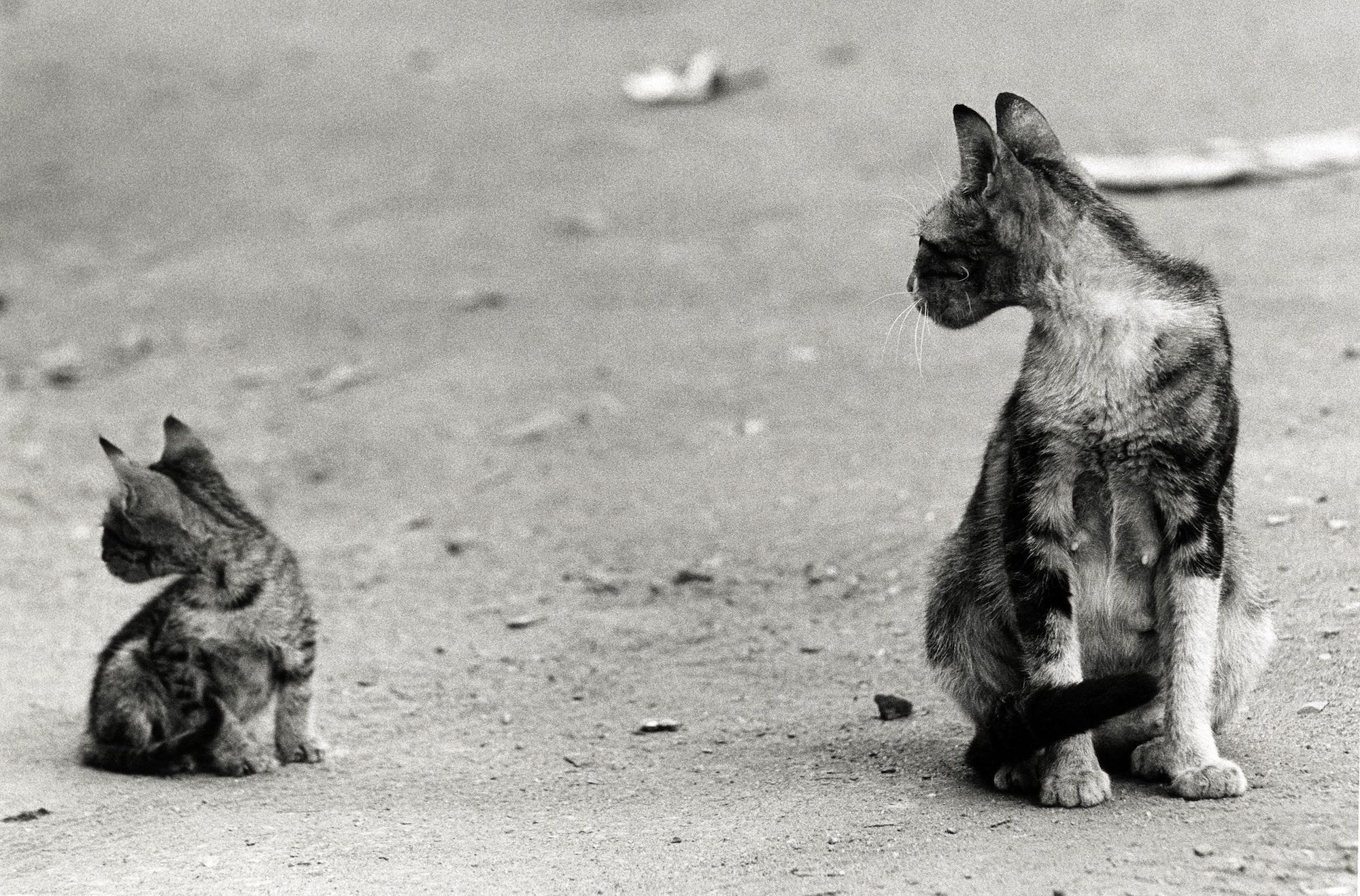 walter_rothwell_photography_cats-05.jpg