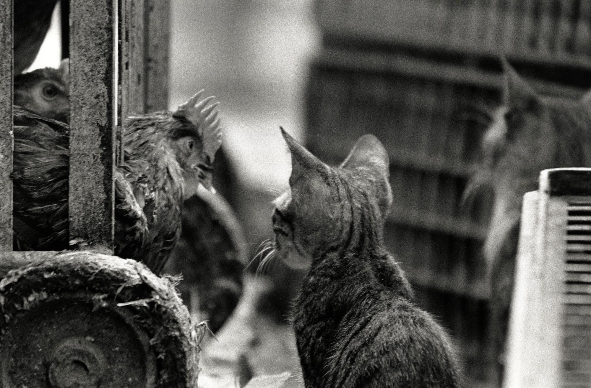 walter_rothwell_photography_cats-07.jpg