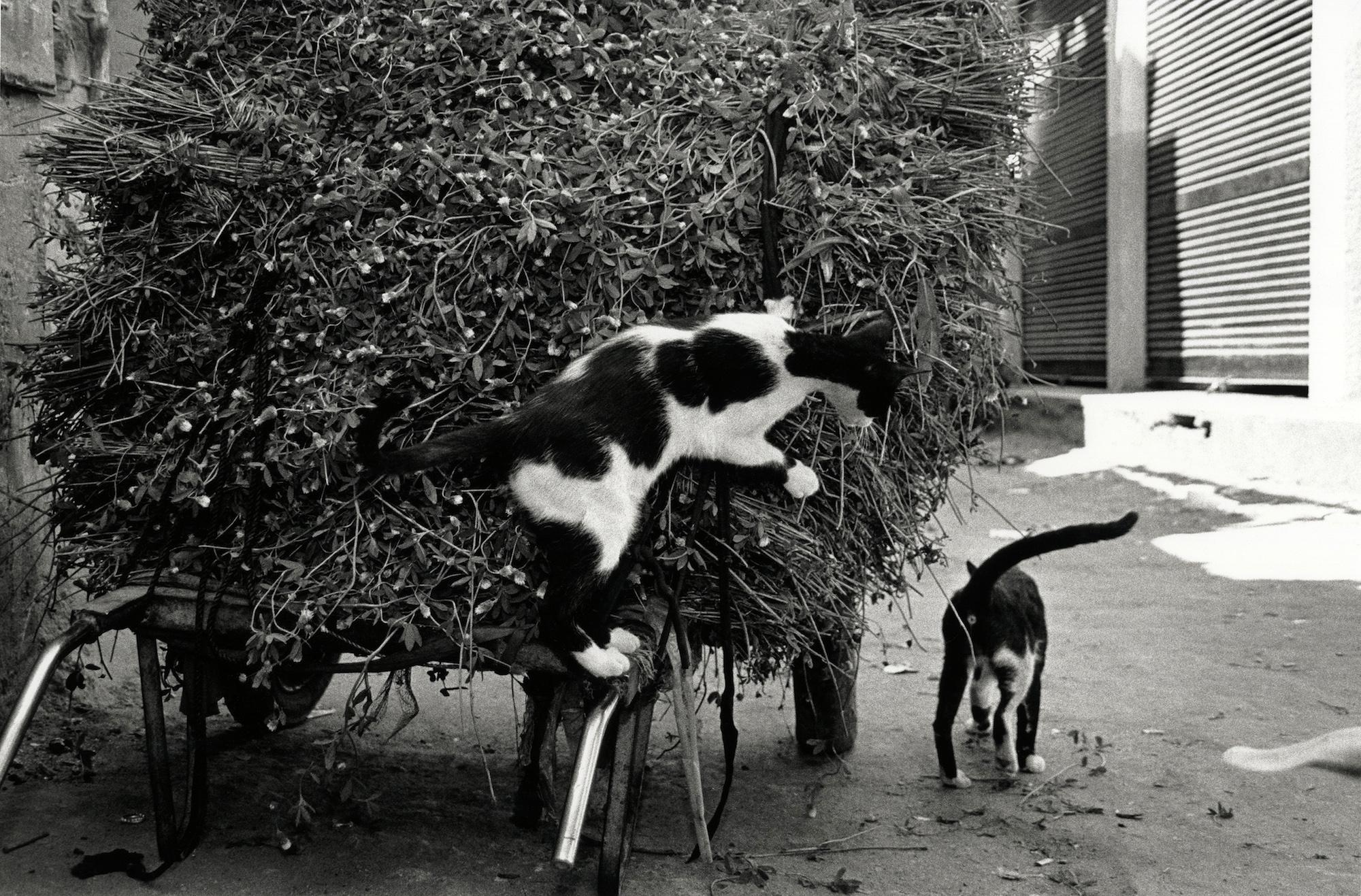 walter_rothwell_photography_cats-08.jpg