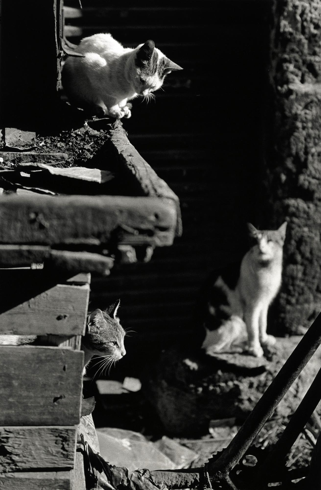 walter_rothwell_photography_cats-09.jpg