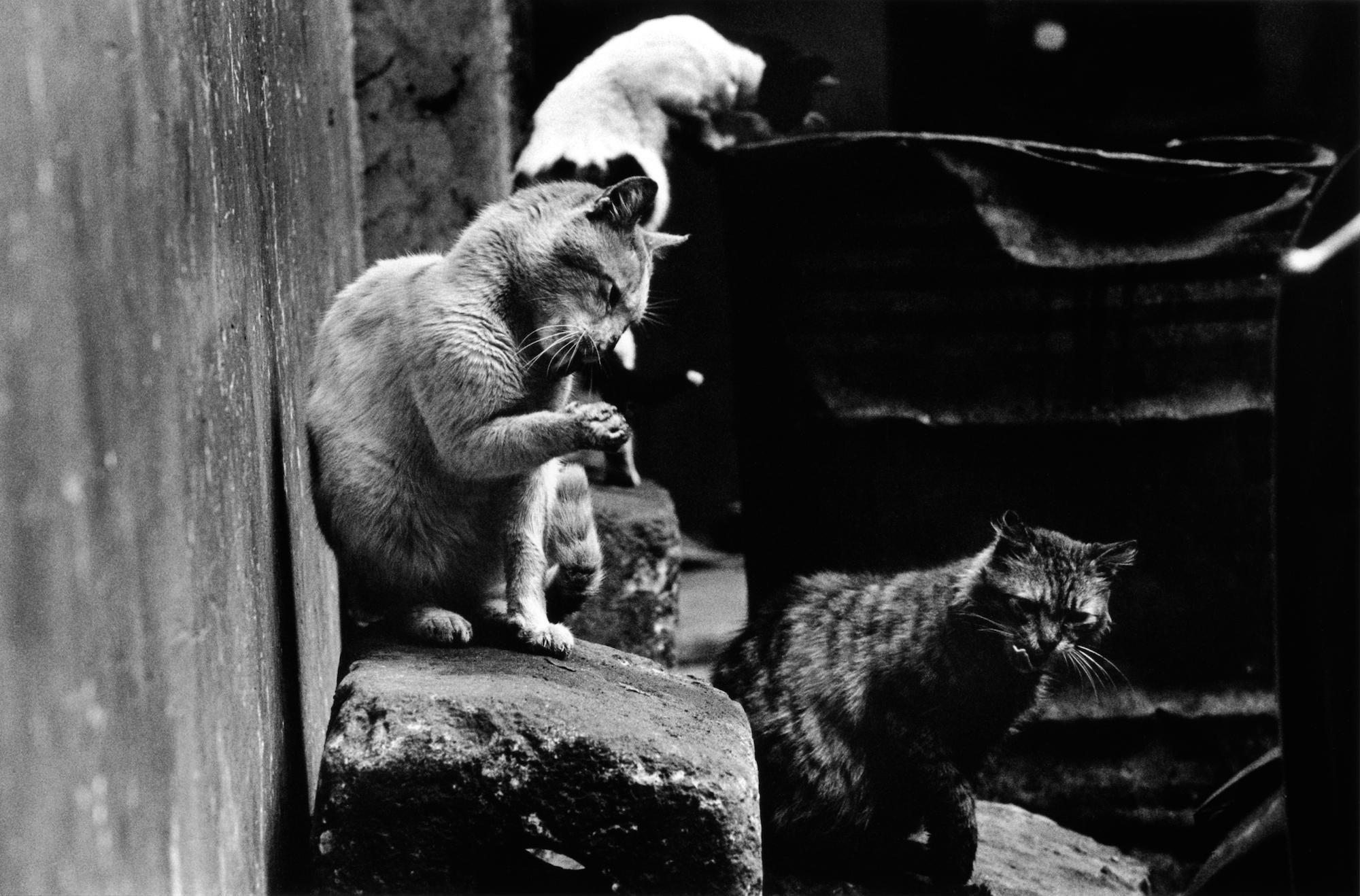 walter_rothwell_photography_cats-011.jpg