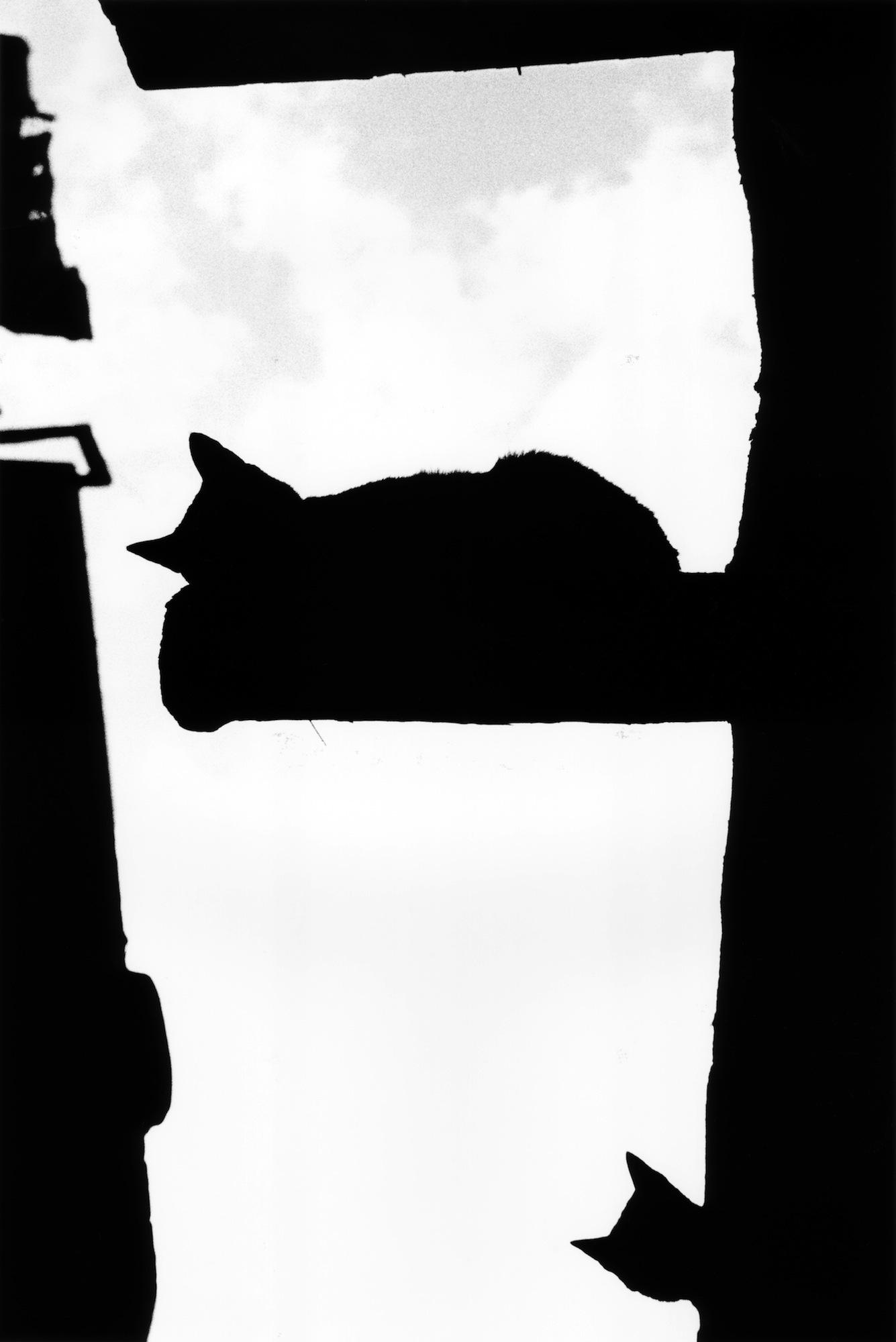 walter_rothwell_photography_cats-012.jpg