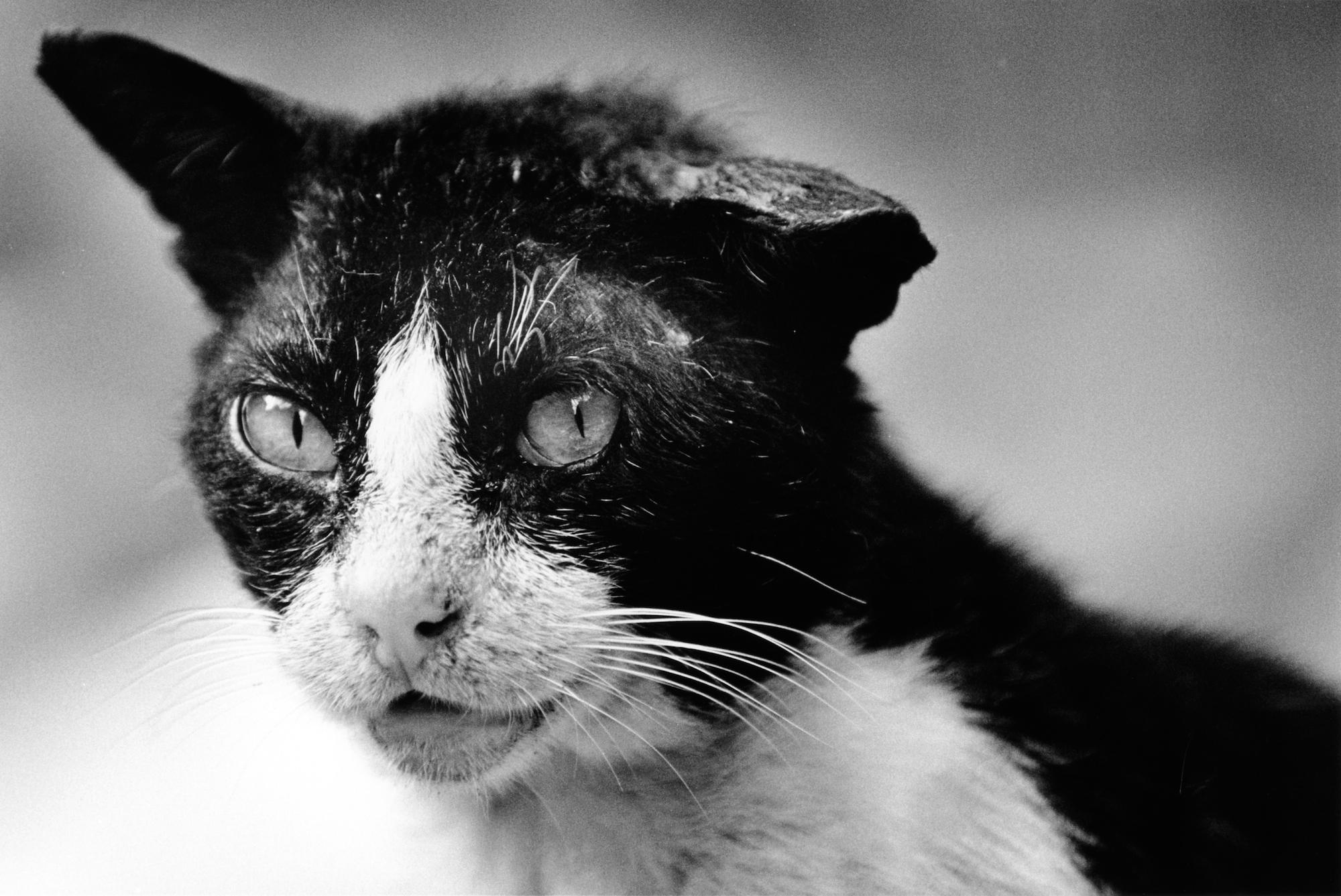 walter_rothwell_photography_cats-014.jpg