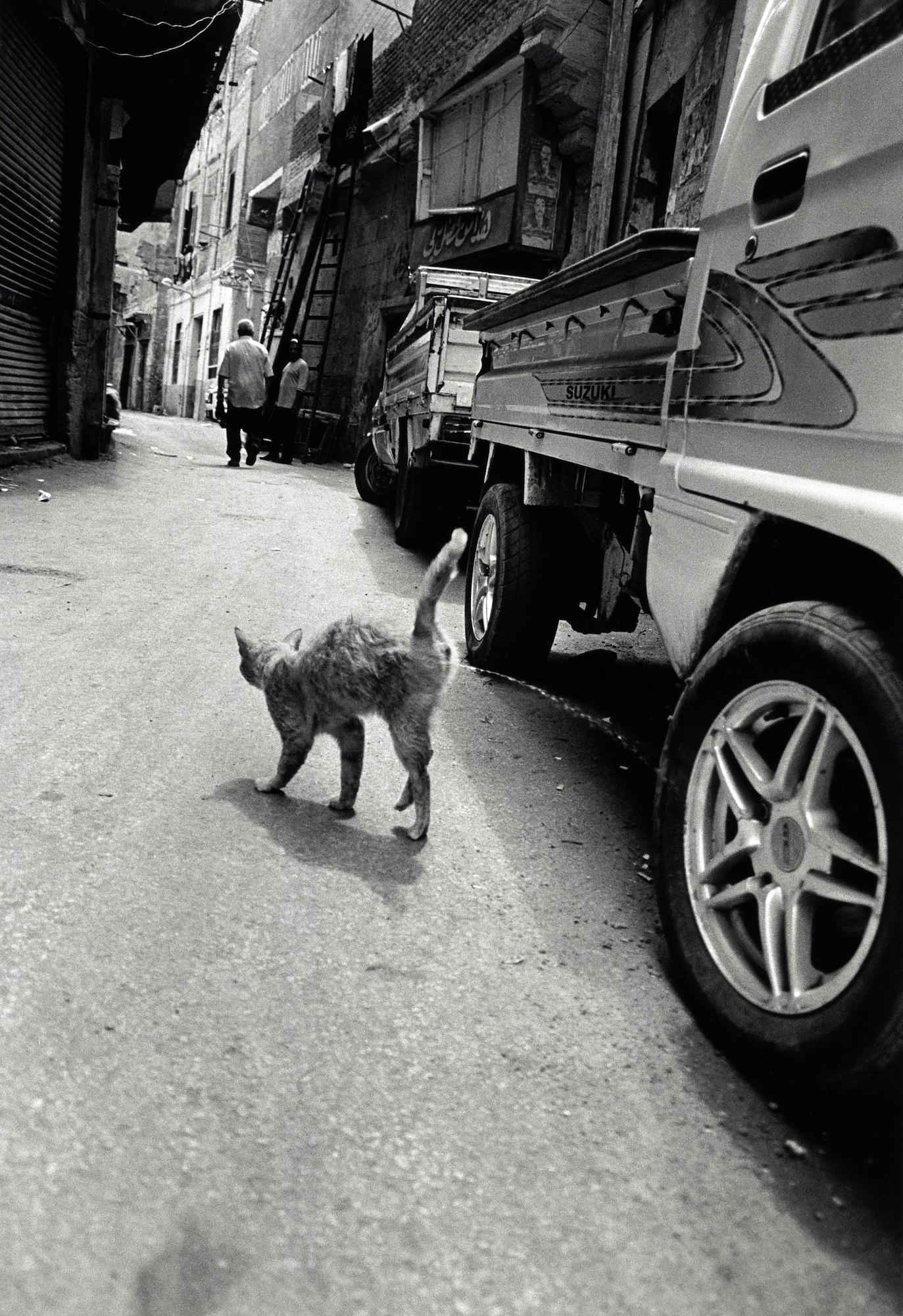 walter_rothwell_photography_cats-015.jpg