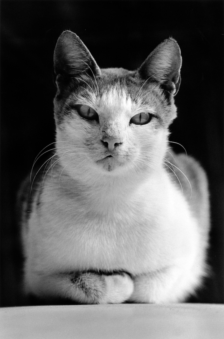 walter_rothwell_photography_cats-018.jpg