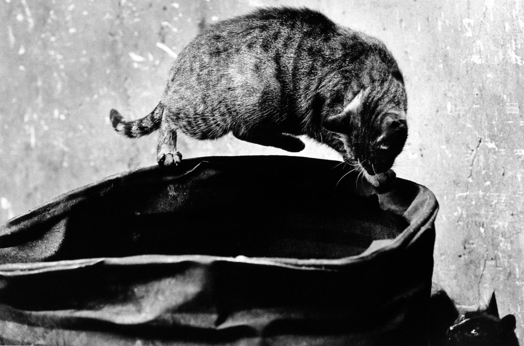 walter_rothwell_photography_cats-017.jpg