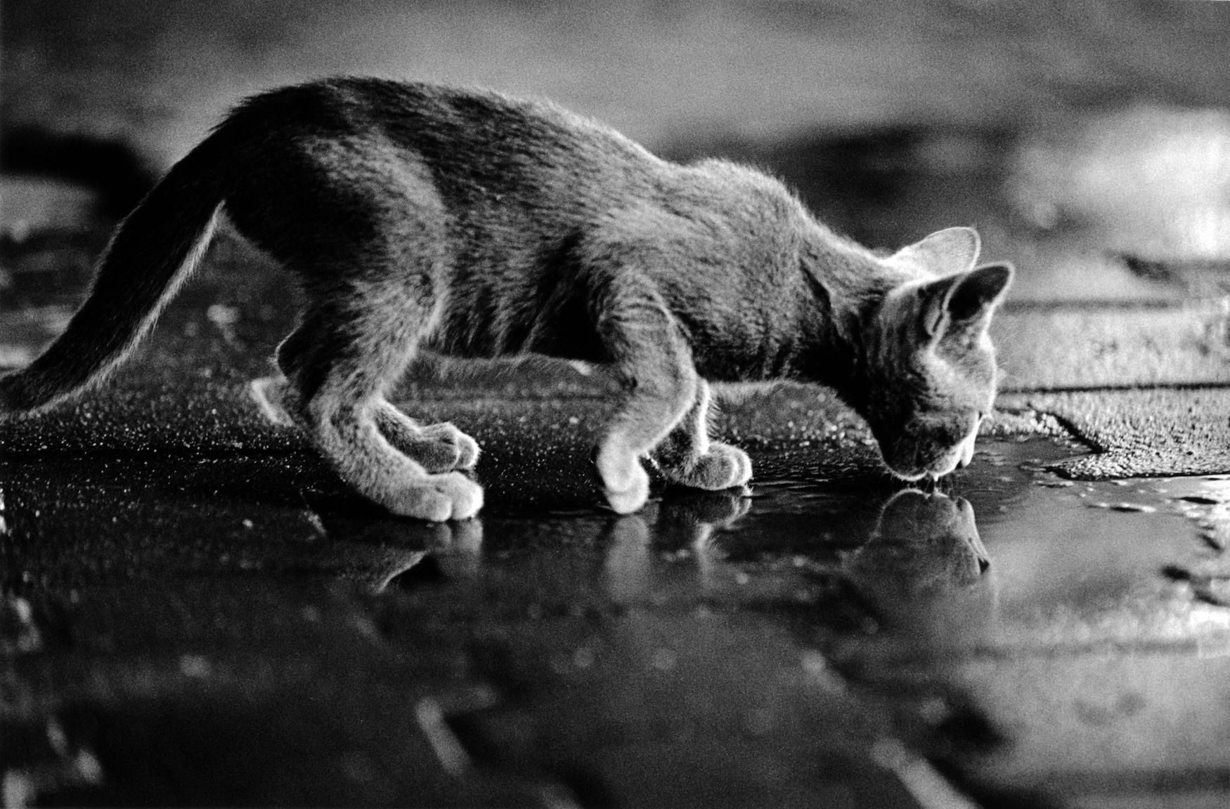 walter_rothwell_photography_cats-019.jpg