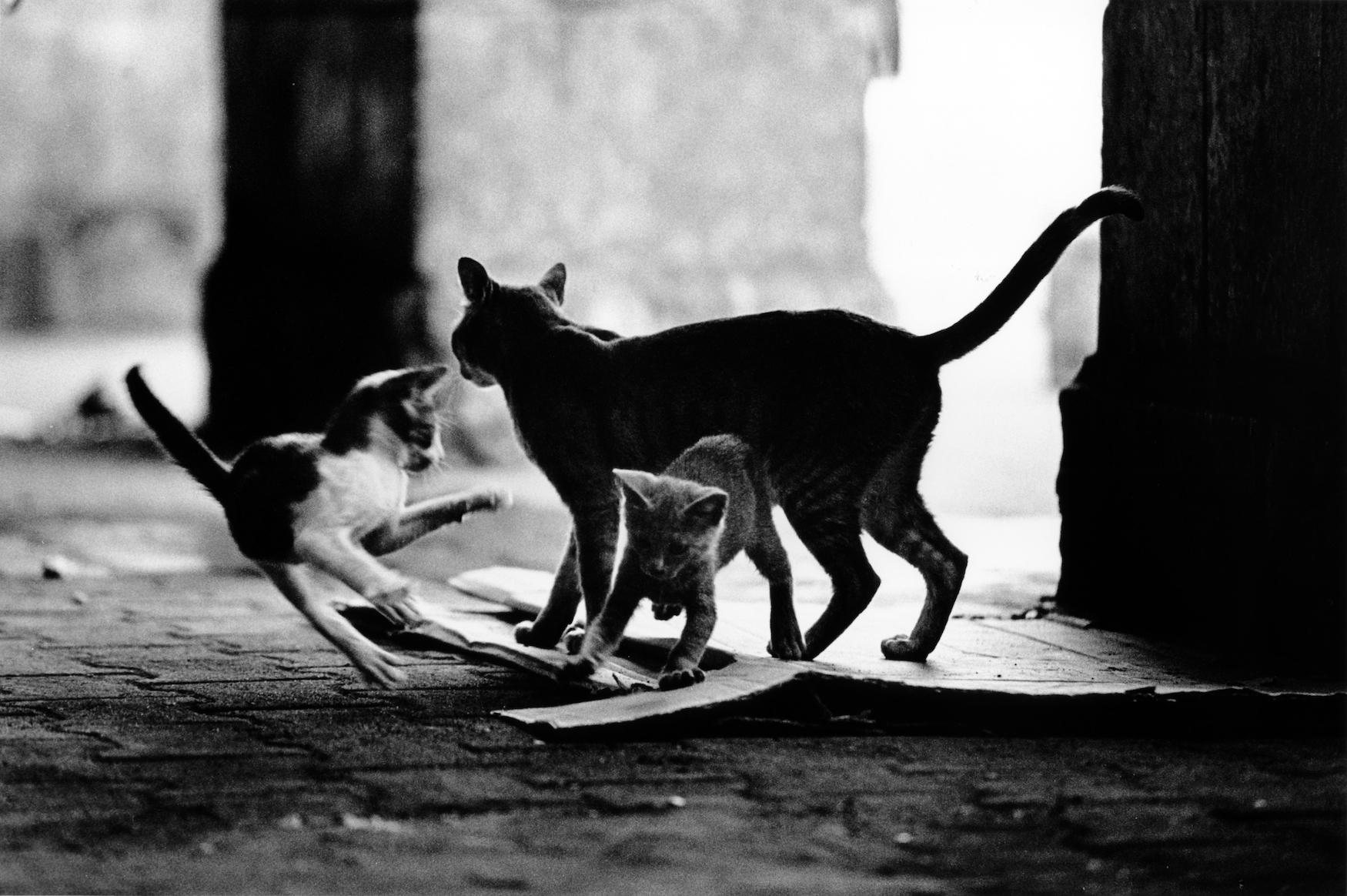 walter_rothwell_photography_cats-023.jpg