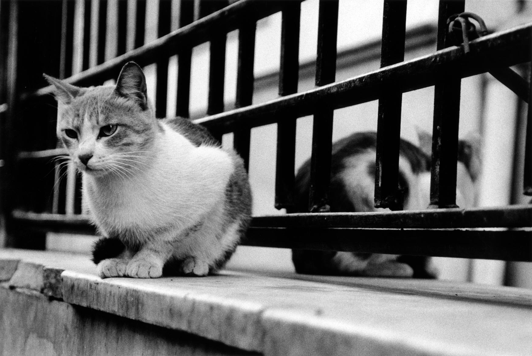 walter_rothwell_photography_cats-025.jpg