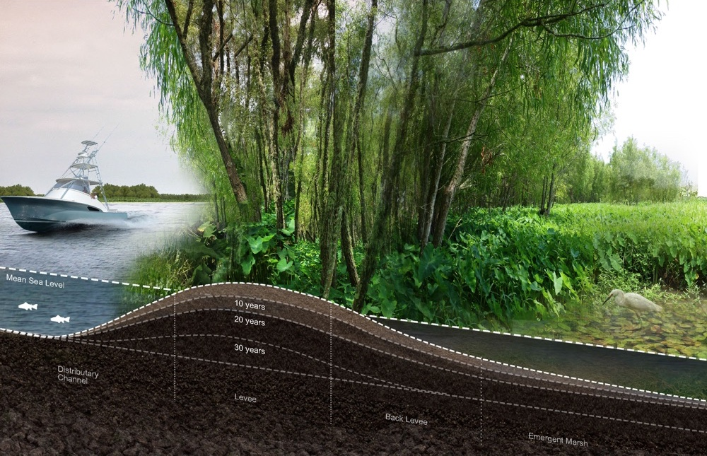 Visualization of fully established natural levee with trees.