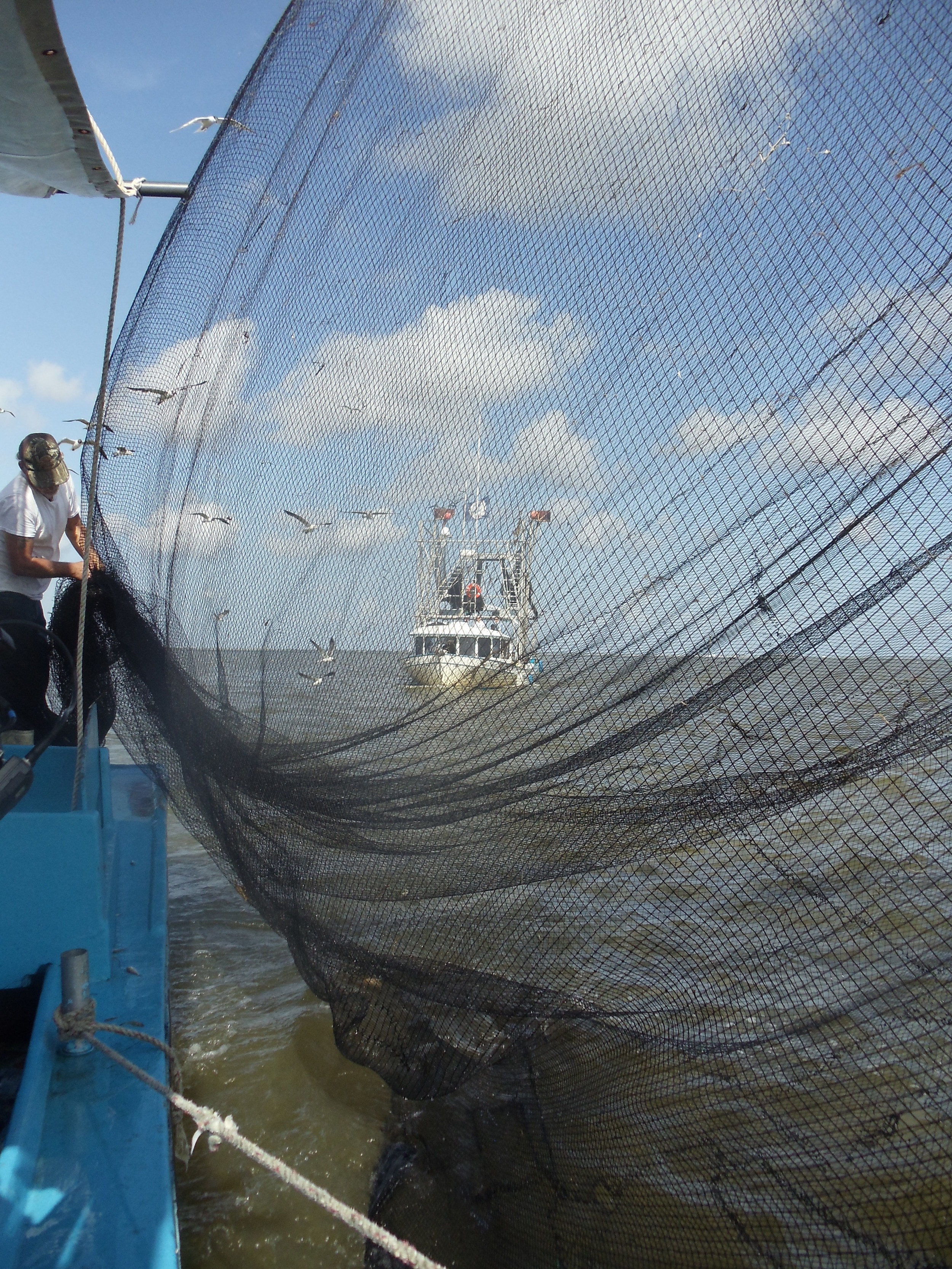 Shrimper working with net.