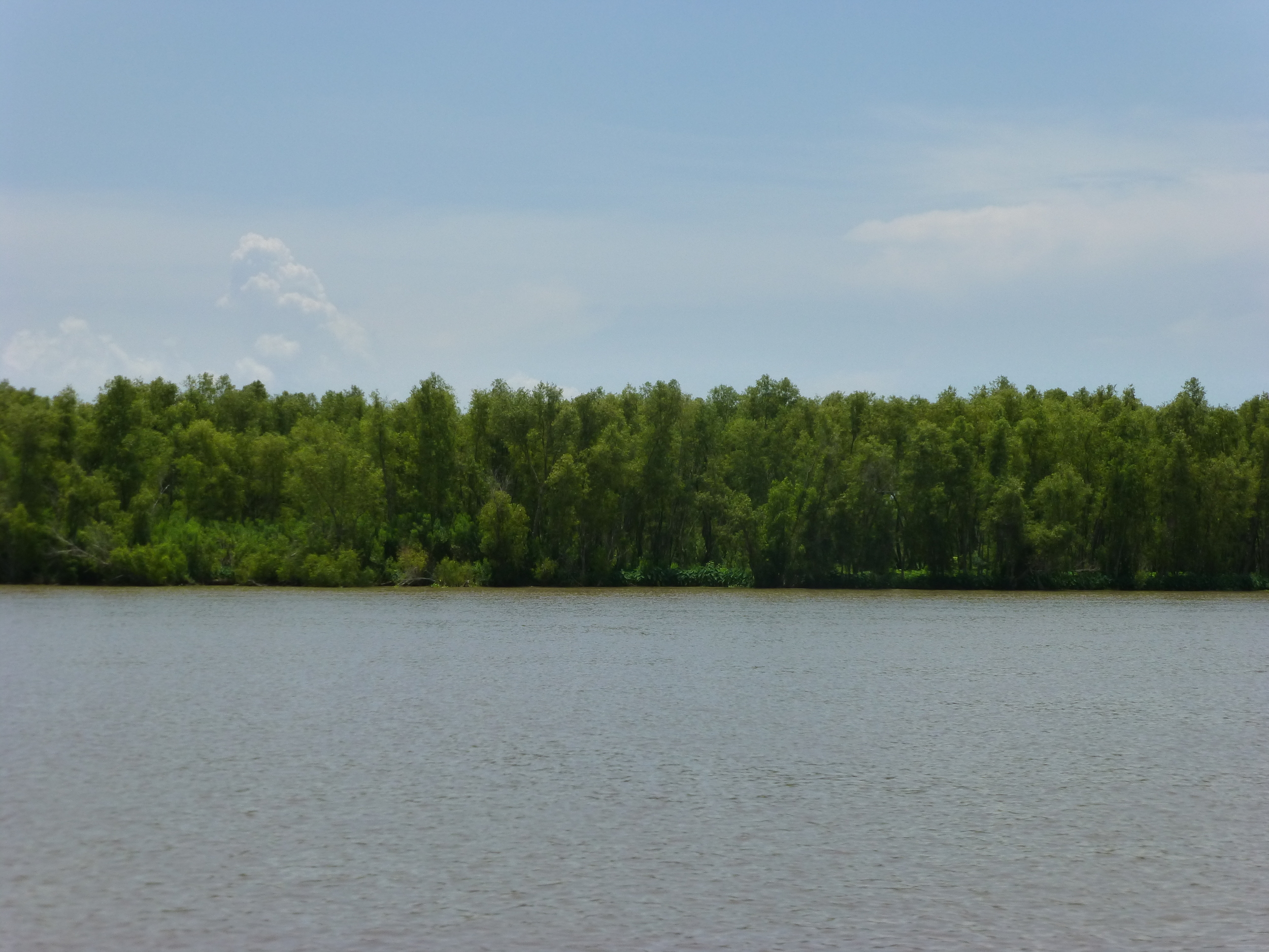 Natural levee on Mike Island.