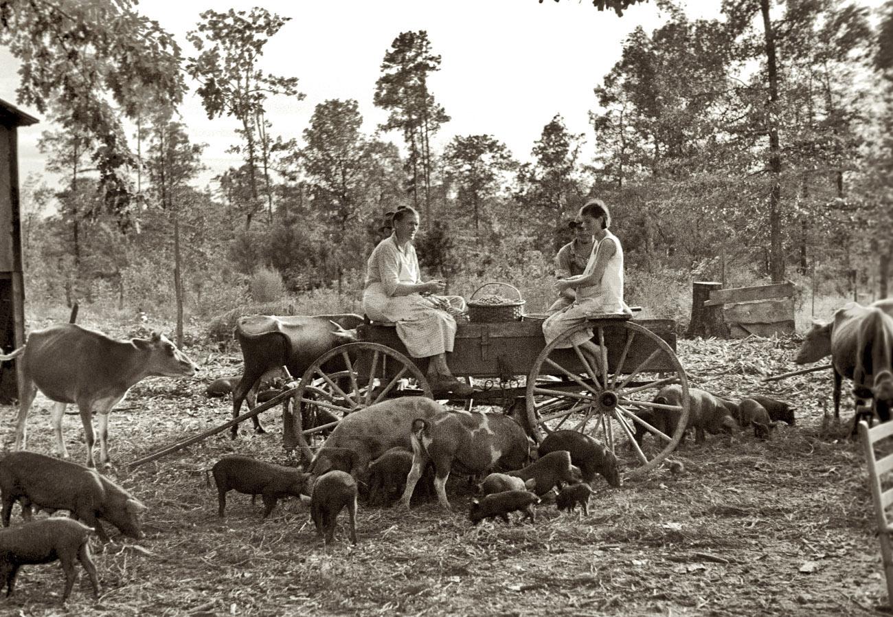 3600 lbs of Hay,  1910