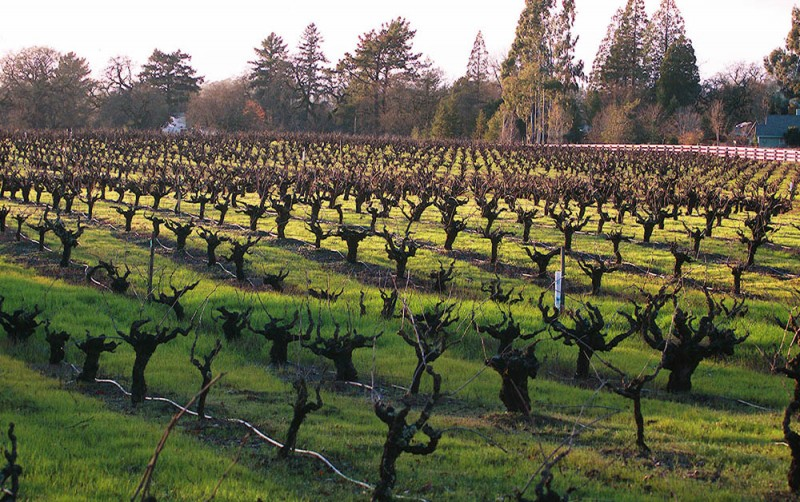 Mayacamas Vineyards, Napa Valley California
