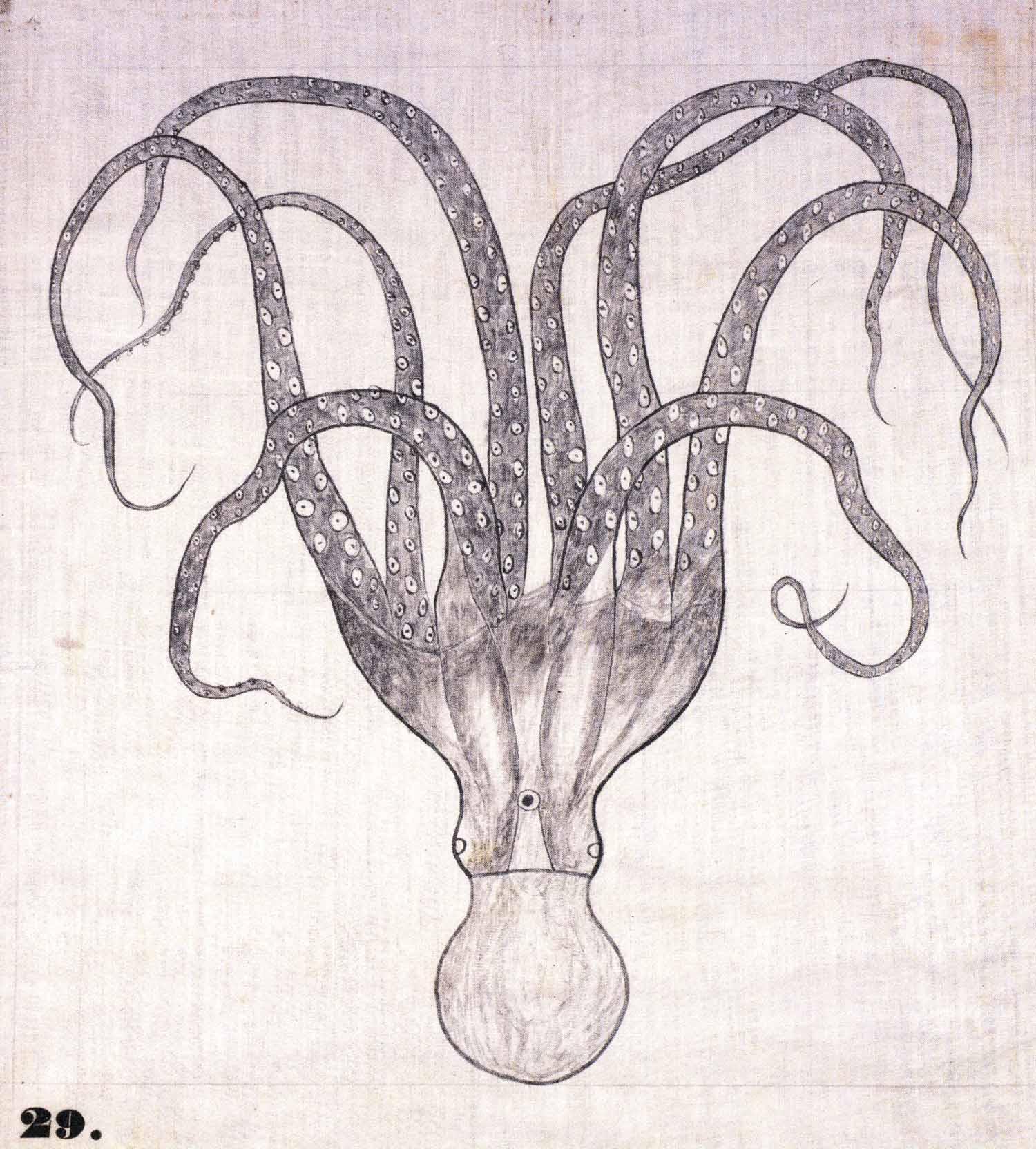 Octopus,  1828-40