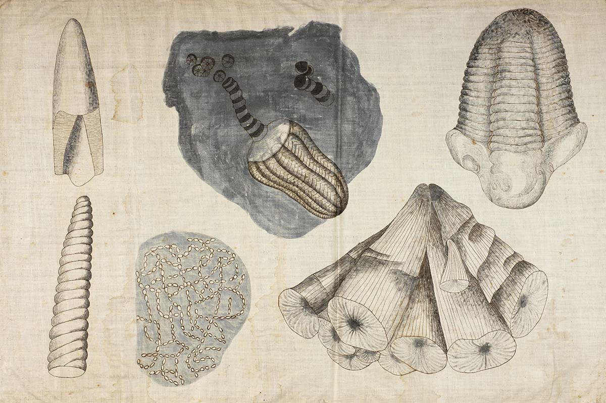Hitch_Invert_Fossils_1828.jpg