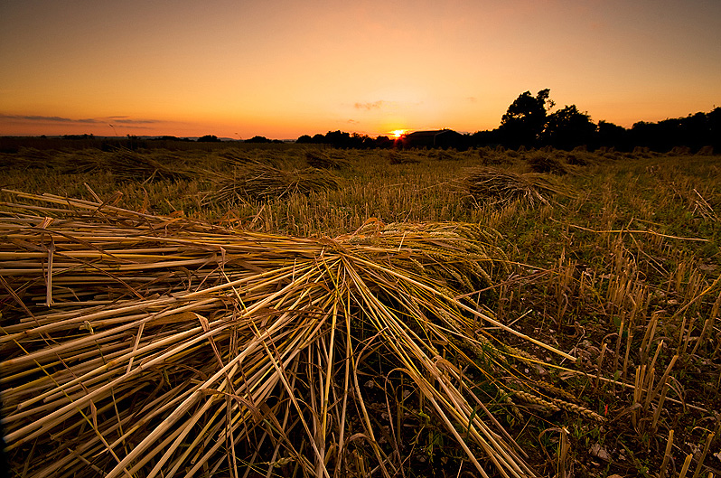 Sun falling behind the horizon as a new crop of thatching straw dries natrually in the great outdoors - just as it has done for thousands of years