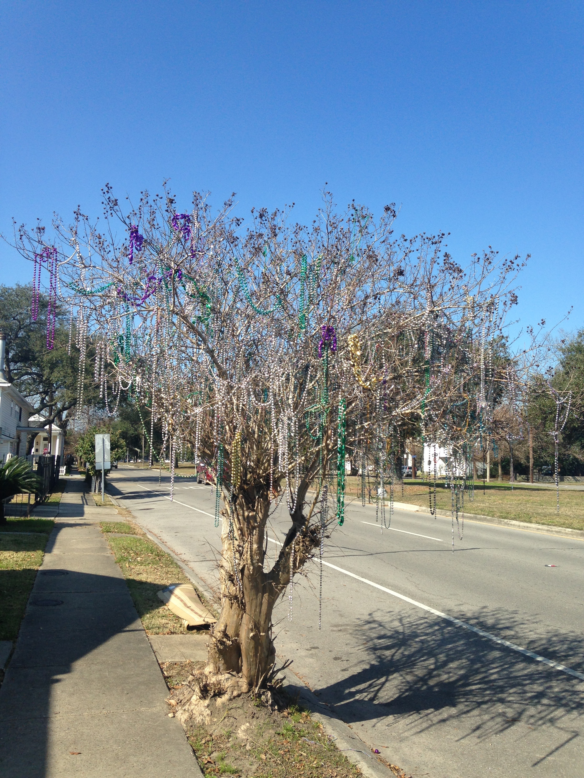 Ready for it's next round of beads!! Show us what you got, tree!