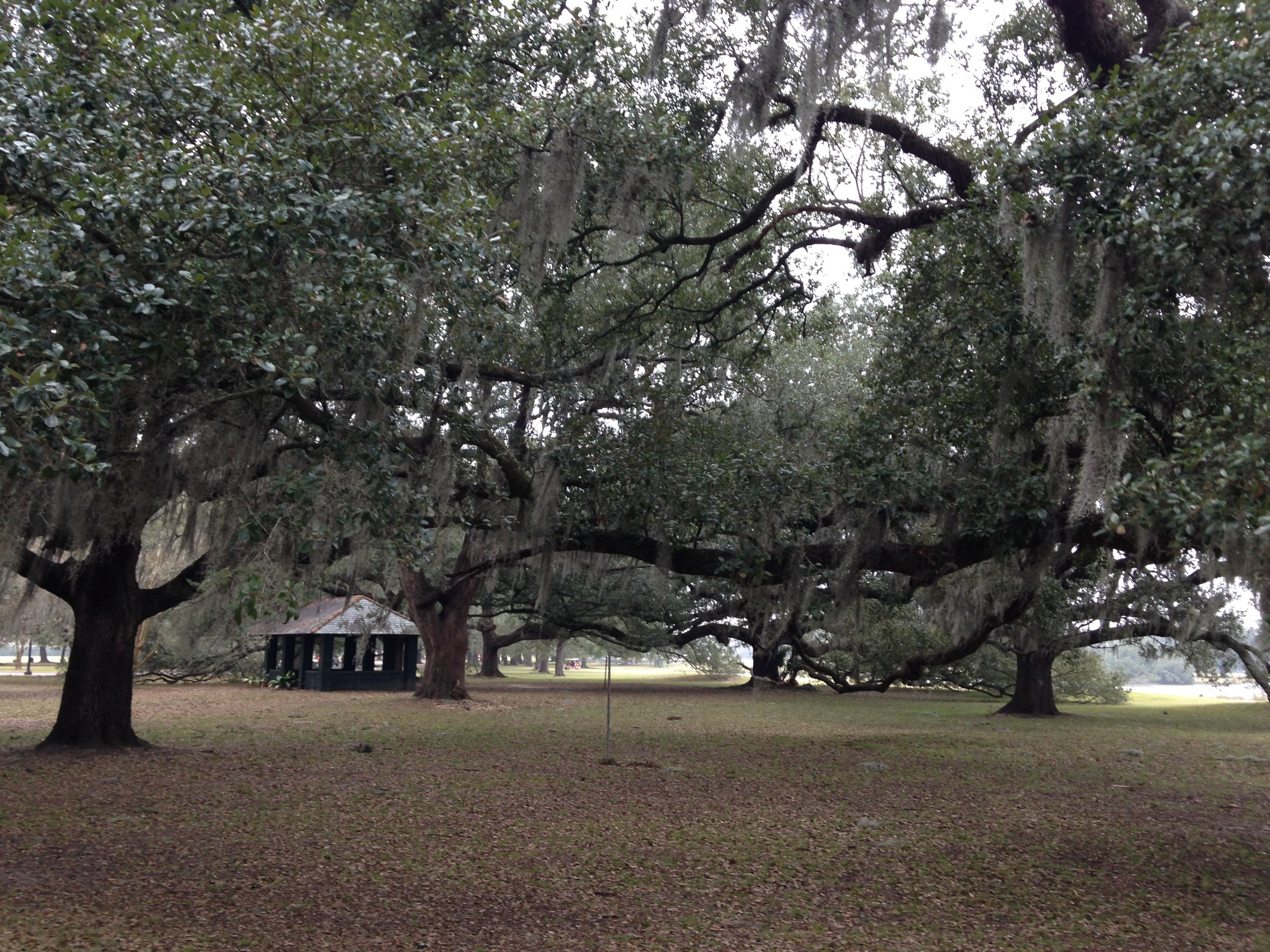 Where I go when I need a sense of peace, City Park in New Orleans.