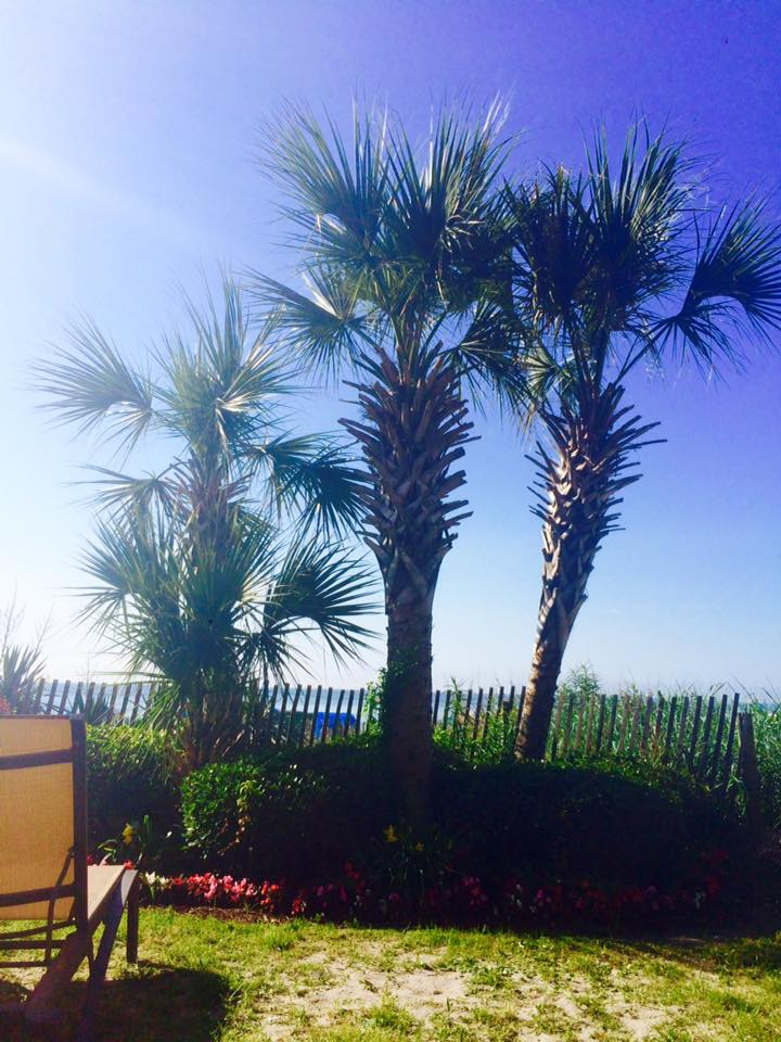 Stop and Smells the Palm Trees.  We're thankful!