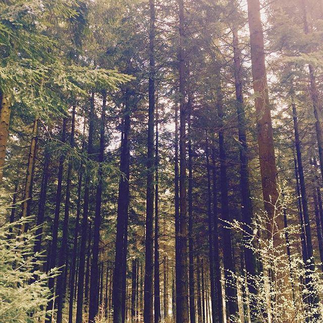 #Longleat #trees