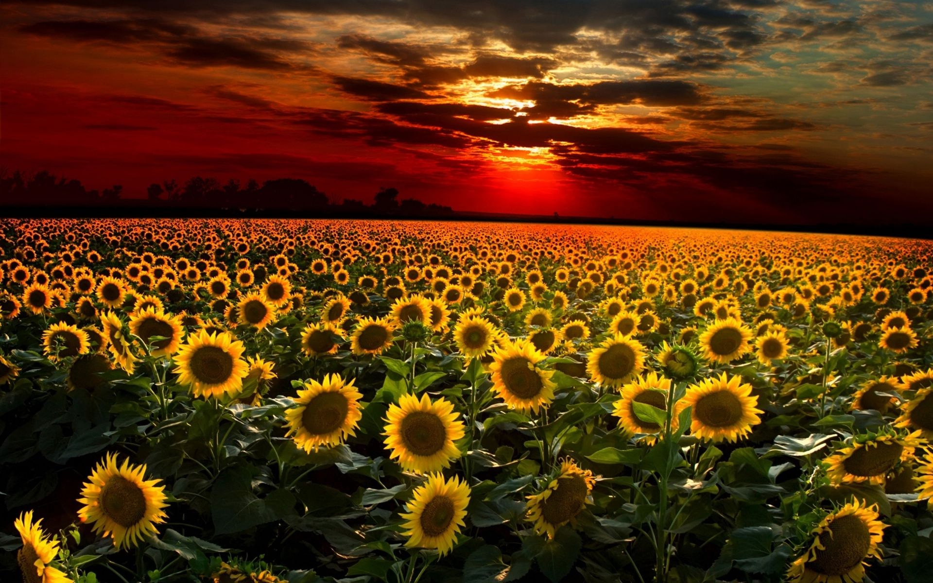 sunflowers and sunsets.jpg