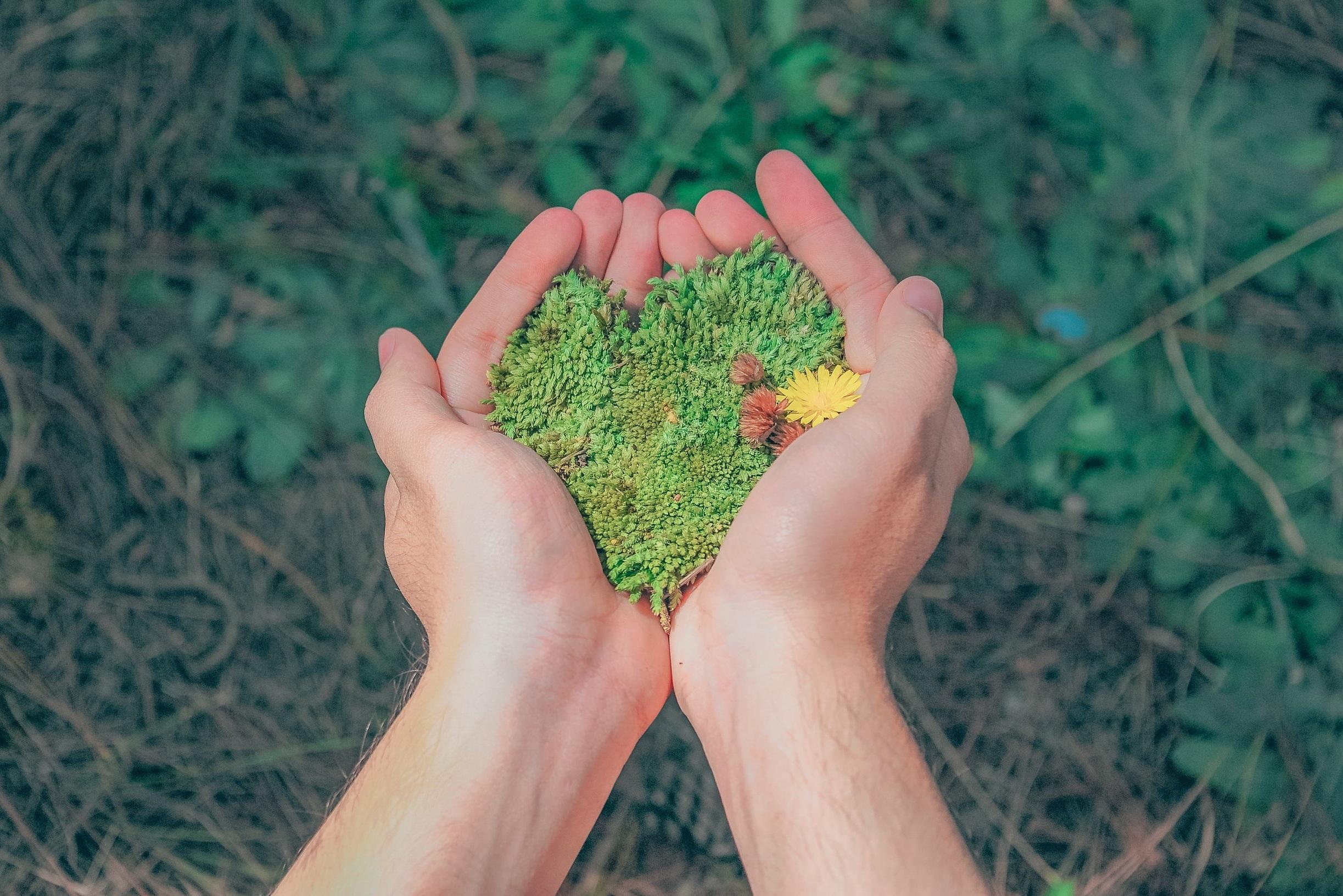 daylight-environment-flora-1230157.jpg