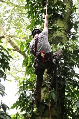 Arbor hawaii climber, BRENDON FEW