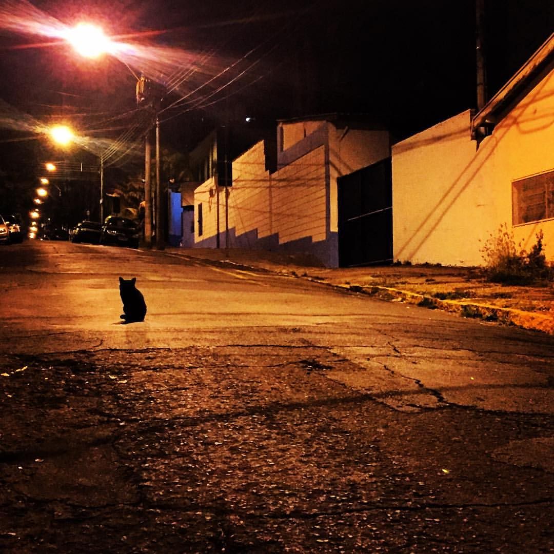 My night friend #piracicaba #saopaulo #brasil