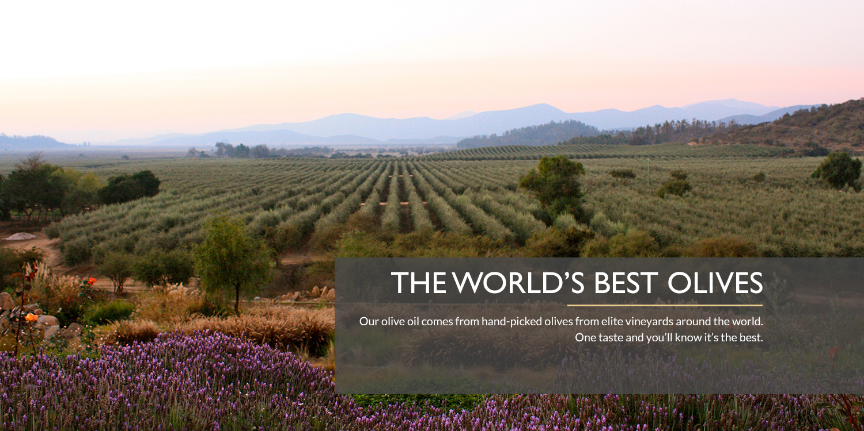 The World's Best Olives.jpg