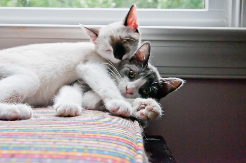 Furry Friends Pets-4.jpg