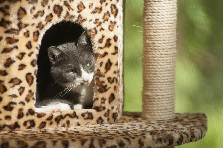 Furry Friends Pets-19.jpg