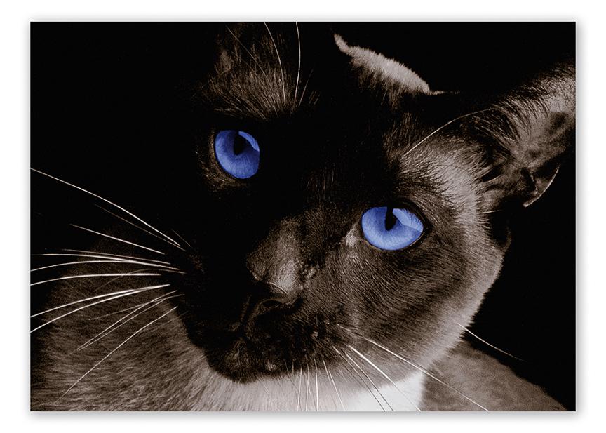 Furry Friends Pets-6.jpg